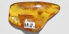 Polished Baltic Amber with Chironomid Midge
