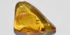 Polished Baltic Amber with Nematoceran Flies