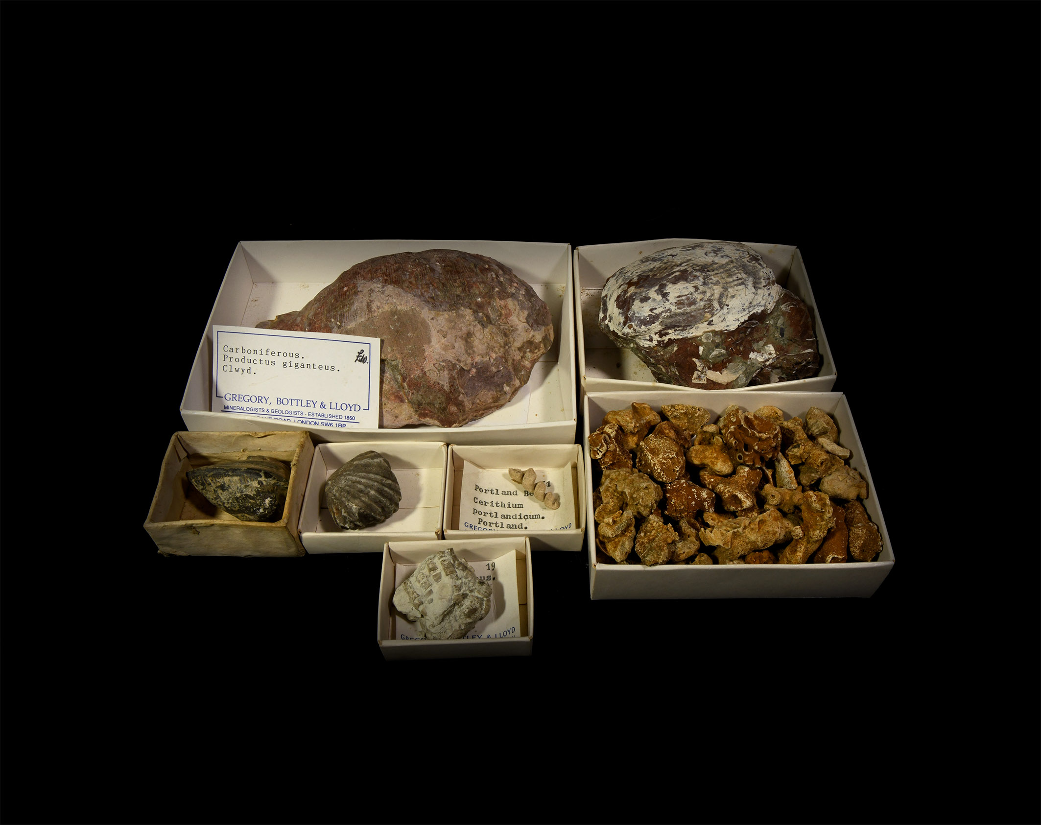 Natural History - Historic British and Other Fossil Collection