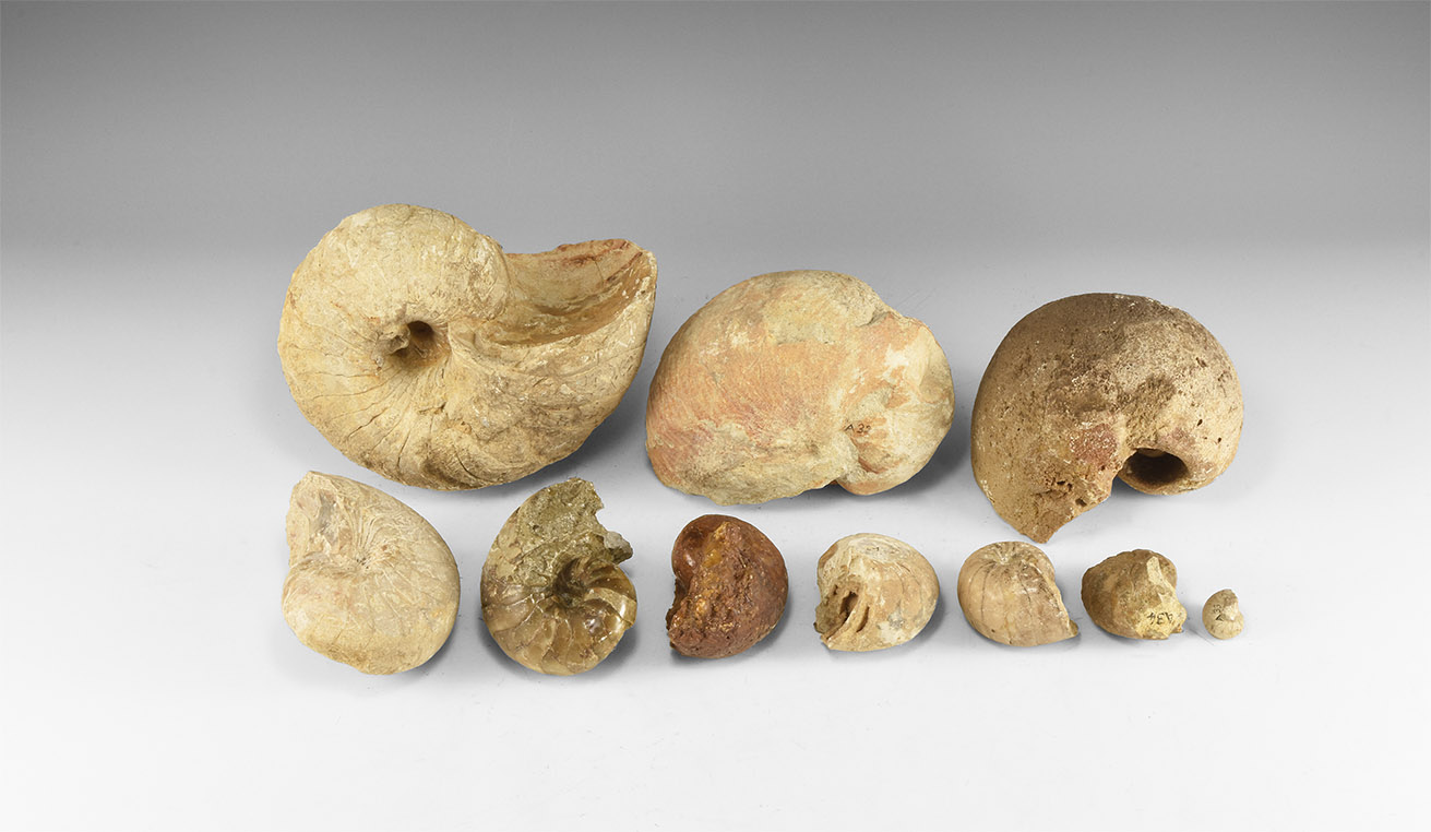 Natural History - Collection of British Nautiloid Fossils