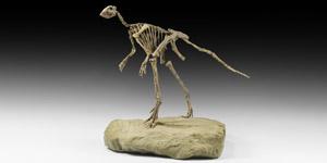 Natural History - Jeholosaurus Biped Dinosaur