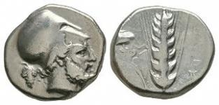 Ancient Greek Coins - Lucania - Metapontum - Barley Ear Stater