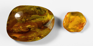 Russian Amber Pieces with Insects