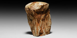 Fossilised Wood Stump