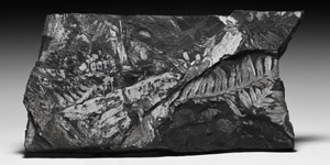 White Pecopteris Fossil Fern