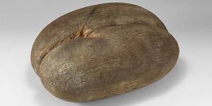 Pacific Coco De Mer Nut