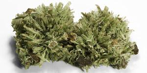 Natural History - Large Green Selenite Needle Mineral Specimel