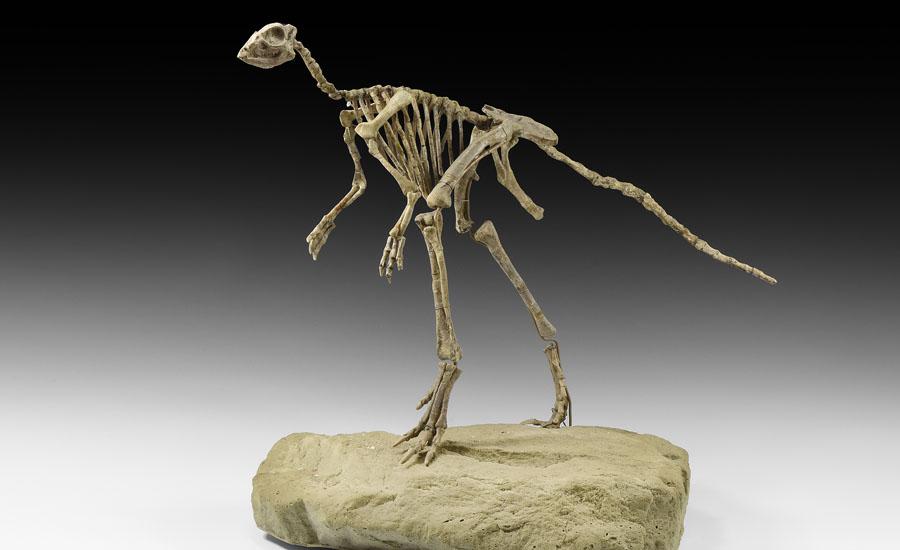 Lot 0209: Jeholosaurus Biped Dinosaur £12,000 - £17,000